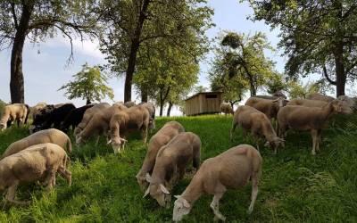 Lammfleisch aus Niederneukichen